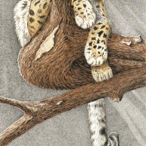 Sherry Steele Artwork - Before Night Falls   Leopard