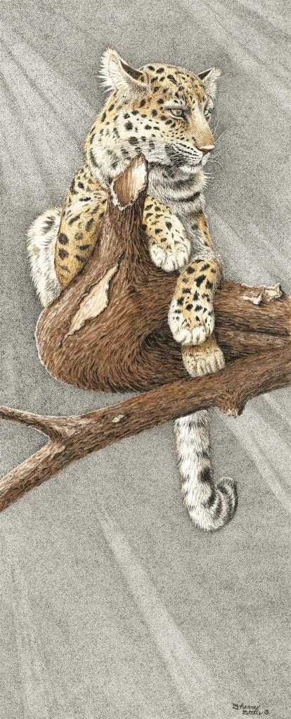 Before Night Falls | Leopard
