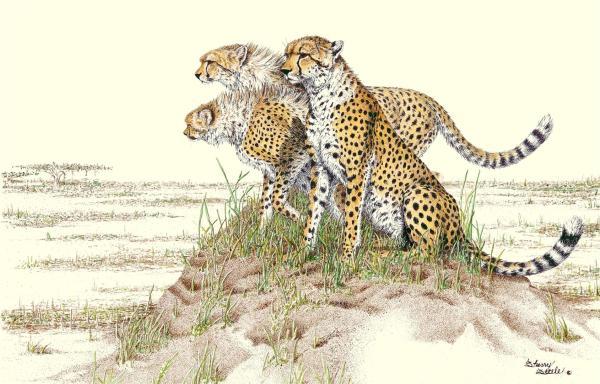 Sherry Steele Artwork - Final Exam | Cheetahs