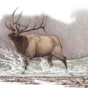 Sherry Steele Artwork - Heartstopper | Elk