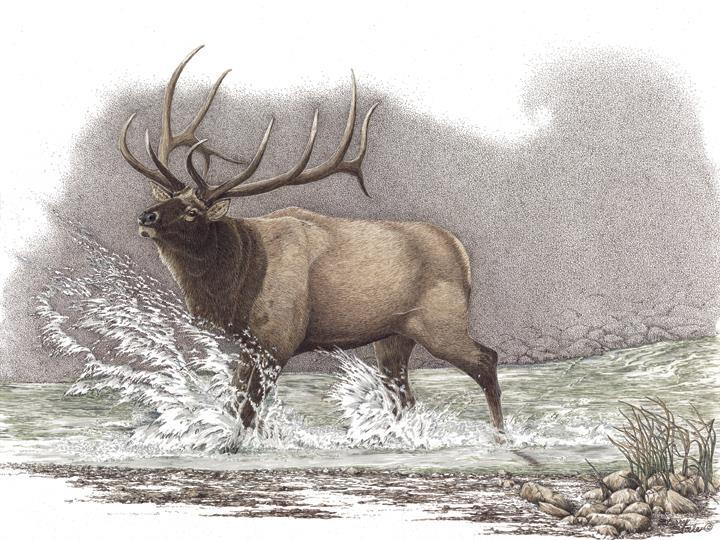 Heartstopper | Elk