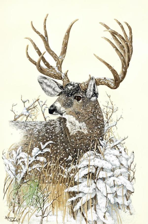 Sherry Steele Artwork - High Desert Dandy   Deer