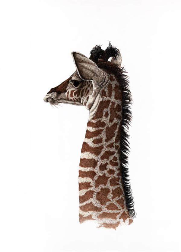 Sherry Steele Artwork - It's Hard to be Humble | Giraffe