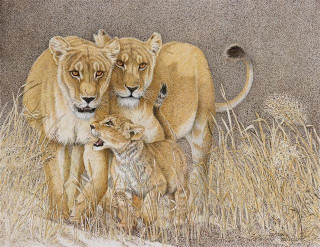 Pride and Joy | Lions