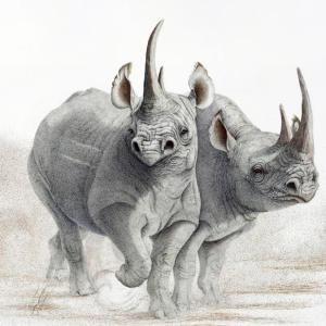 Sherry Steele Artwork - Ready to Rumble | Rhinos