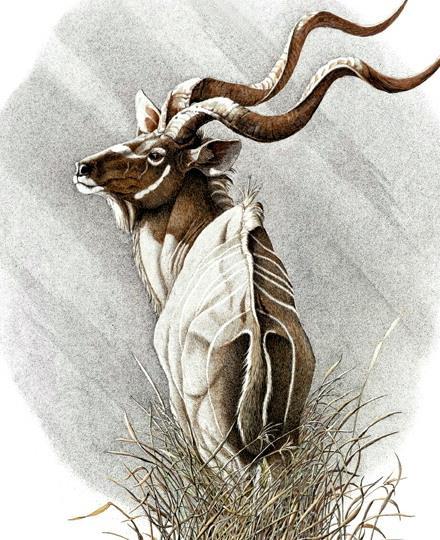 Sherry Steele Artwork - The Arrogance Of Elegance | Kudu