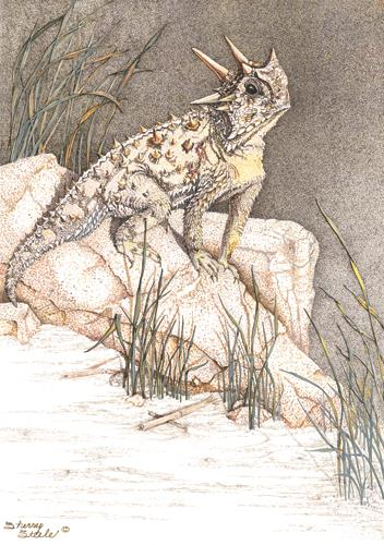 Sherry Steele Artwork - Heart of a Giant   Horned Toad