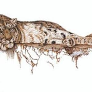 Sherry Steele Artwork - High Mountain Muse   Leopard