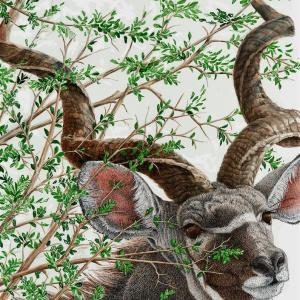 Sherry Steele Artwork - A Glance and Gone | Kudu