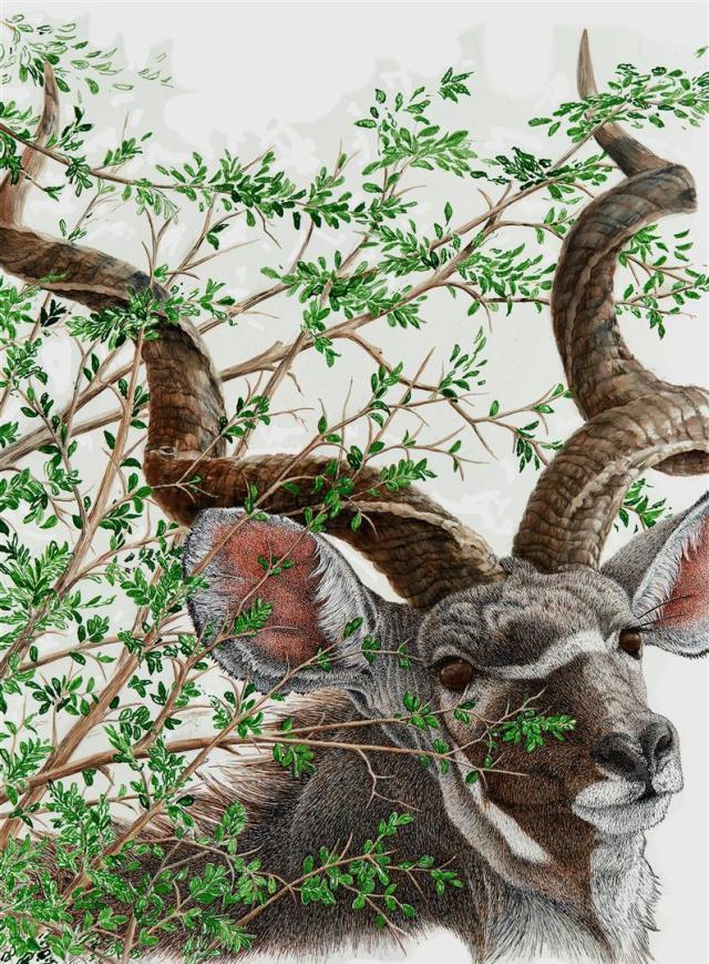 A Glance and Gone | Kudu