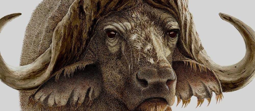 Sherry Steele Artwork - Gladiator