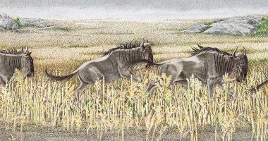 Perpetual Motion II - Wildebeest