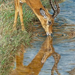 Sherry Steele Artwork Impala