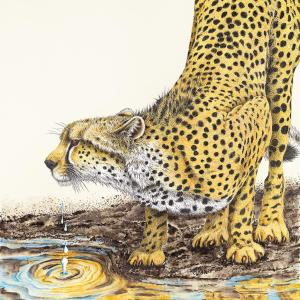 Tension in the Air - Cheetah drinking water by artist Sherry Steele