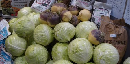 Soccer ball sized cabbages.