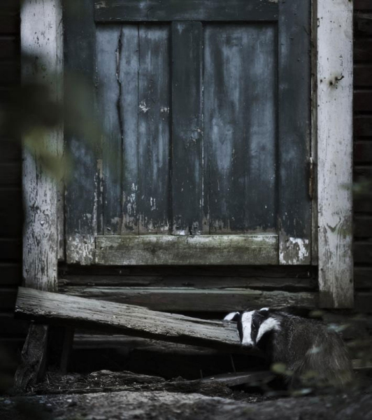 abandoned-house-in-finland-overtaken-by-animals-kai-fagerstrom-7