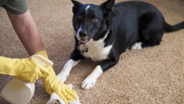 dog_carpet