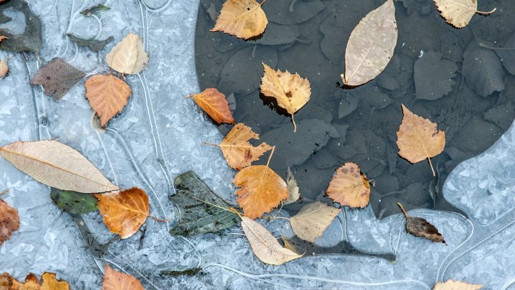 The Cold November Rain