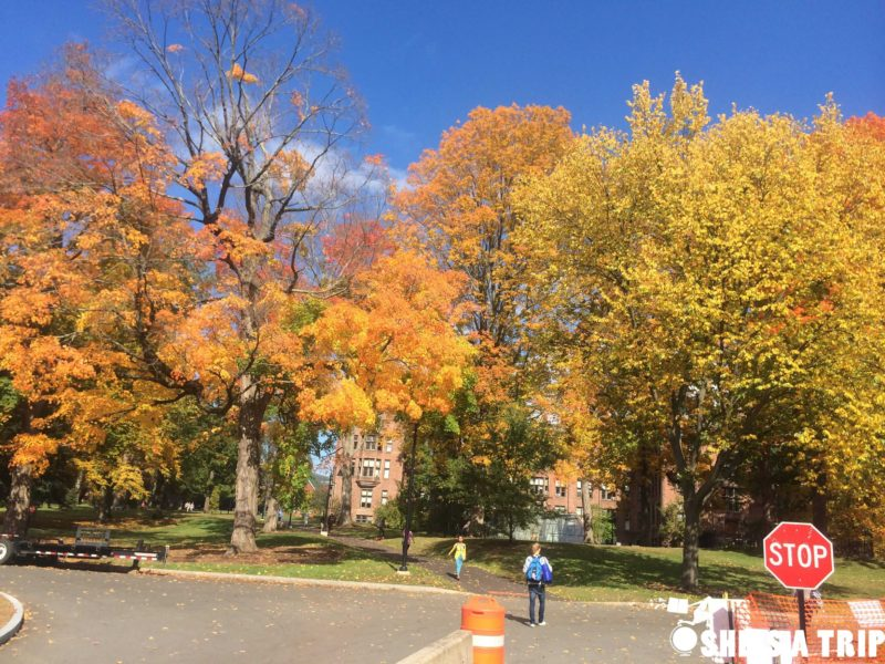 Things To Do in Western Mass Mount Holyoke