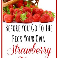 Before You Go To The Pick Your Own Strawberry Farm Tips