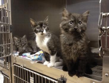 Shelter Kitten