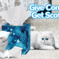 Scotties Facial Tissues Partner to Bring Permanent Housing to Those in Need
