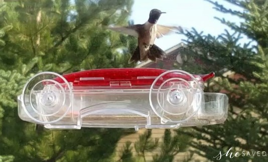 How to Make Hummingbird Nectar And Attract Hummingbirds to Your Yard