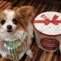 Celebrate Pet Month: Spoiling Your Best Friend with a Milk-Bone Birthday Party!