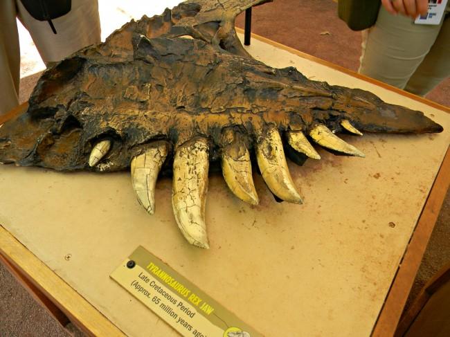 Rex T Fossils Pics Real