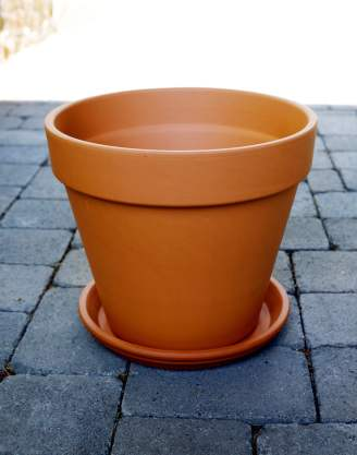 She's So Bright - Terracotta pot