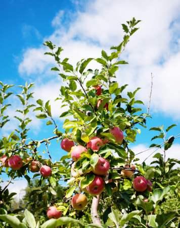 apple_in_the_sky