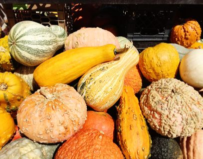 pumpkins_closeup