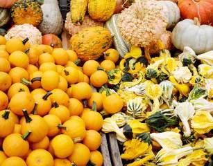 pumpkins_everywhere