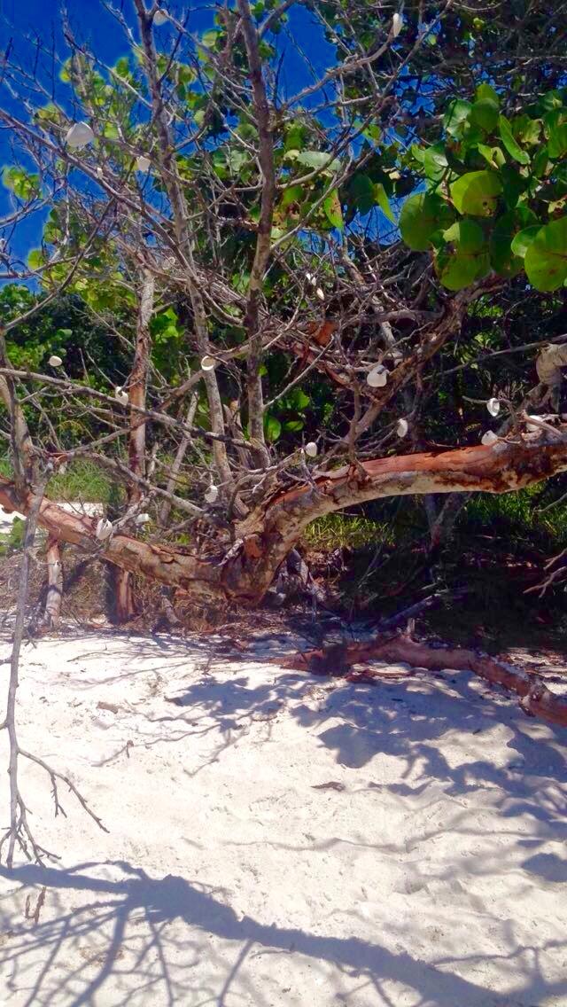 < Tourist tree >