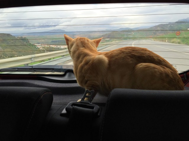 Adopting a Spanish cat in Spain: Fred moves to England
