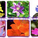 Flores de Bach Curso Abordar las Emociones