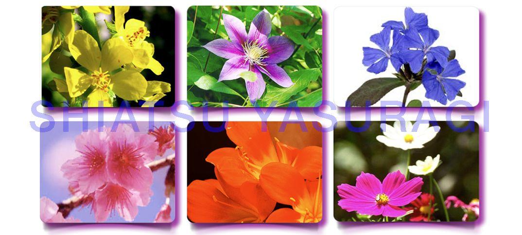Flores de Bach Curso