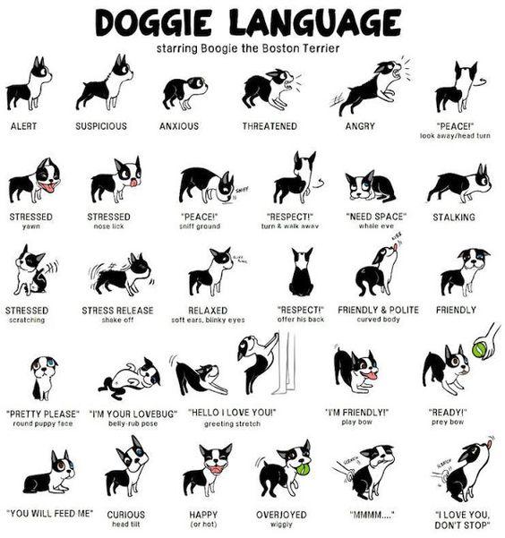 asociale hond