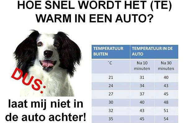 hond auto warm