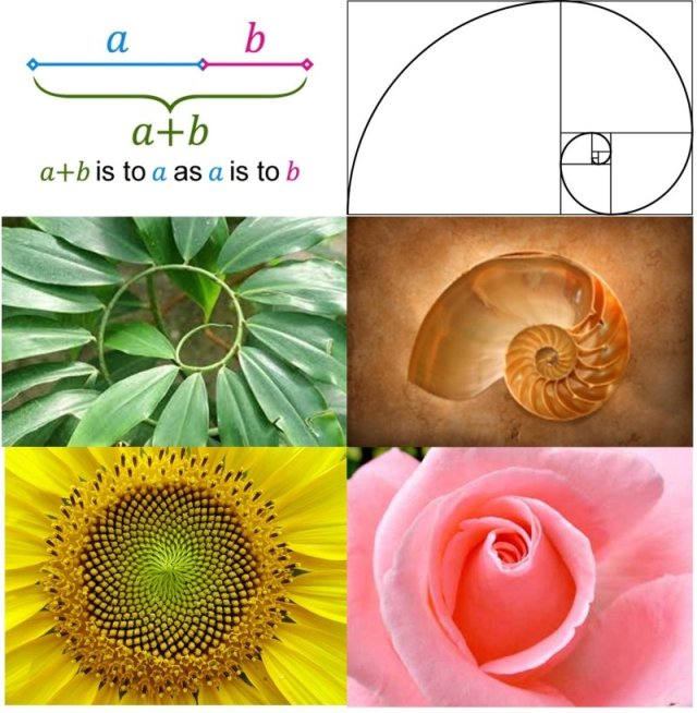golden-ratio-in-nature