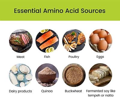 amino acid sources