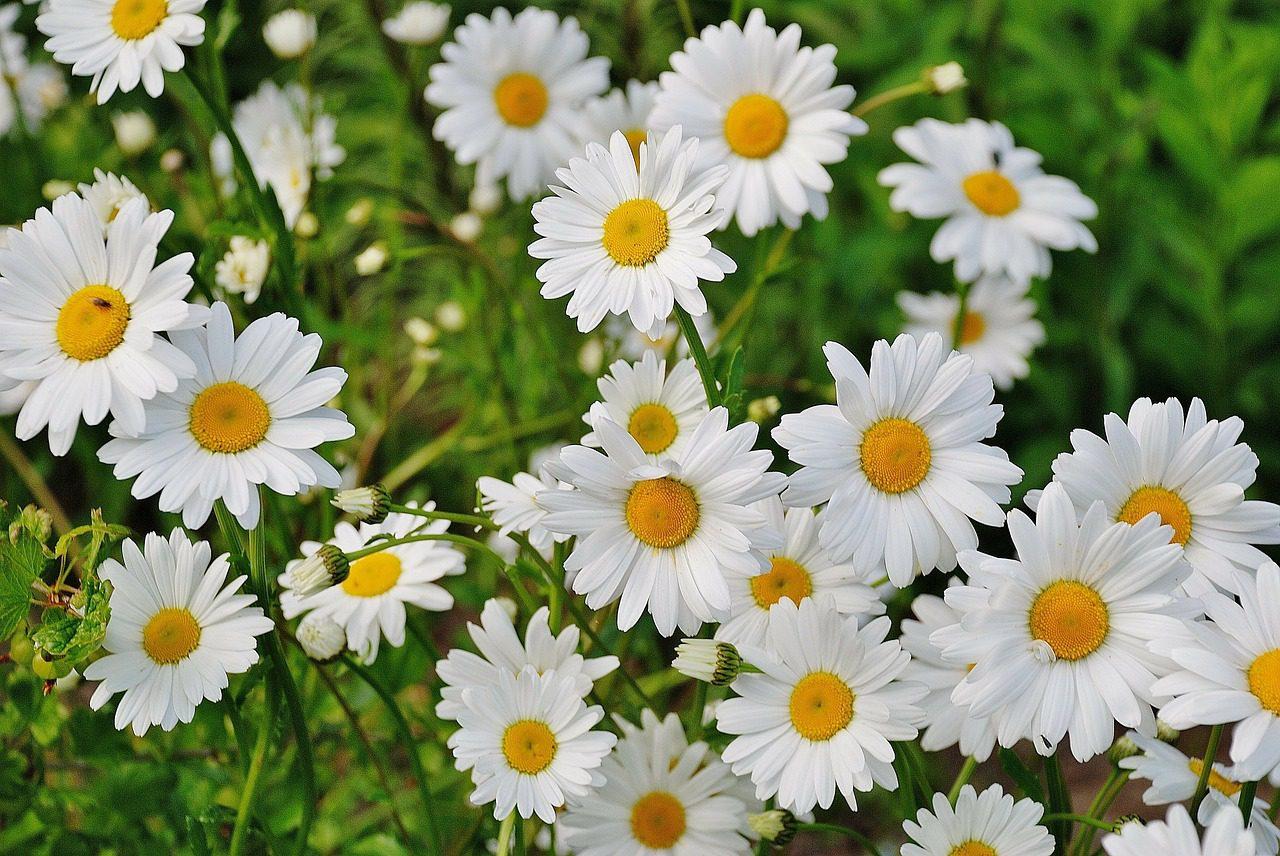 Gardeners Worst Nightmares 28 Perennials You Ll Regret