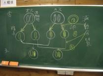 図6:これ出ますね。染色体の組み合わせ。減数分裂。