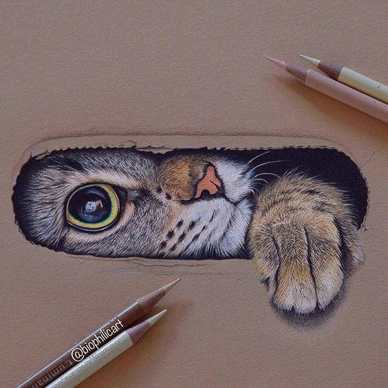 Cat Drawing 3d - 3d things to draw #art #drawing