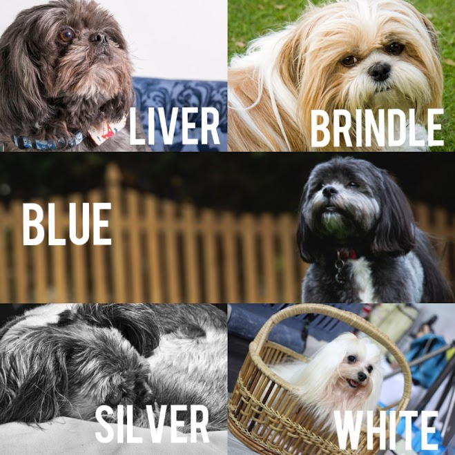Solid Color - Shih Tzu Dog Cot Color