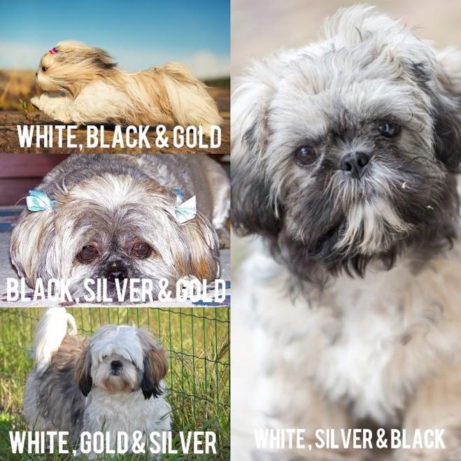 Three Color - Shih Tzu Dog Cot Color