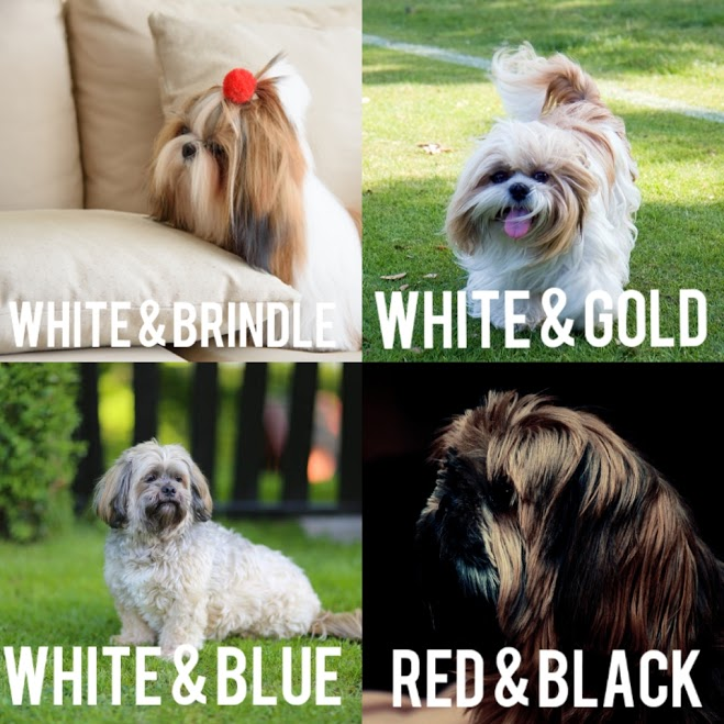 Two Color - Shih Tzu Dog Cot Color