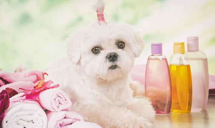 shih tzu shampoo