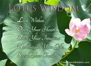 lotuswisdomtinagreene