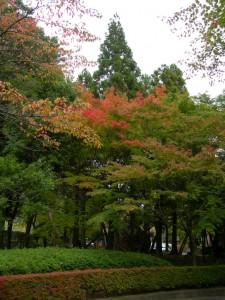 福島県立図書館裏の駐車場にて。だいぶ紅葉してきましたね